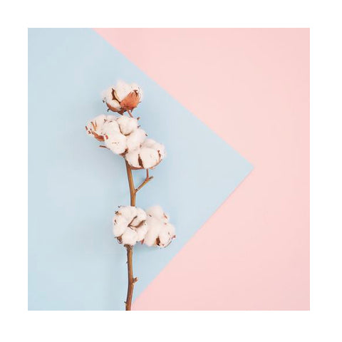 Cotton on background of pink and blue