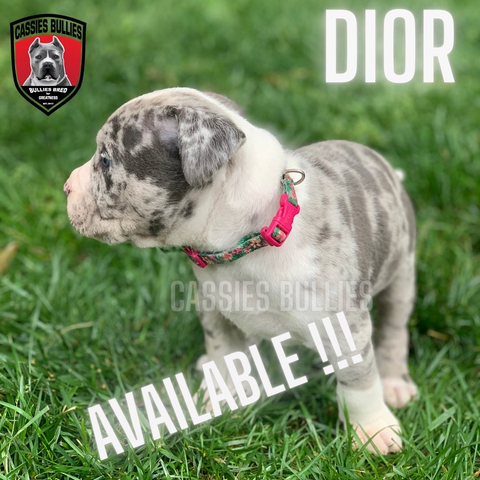 Currently Available Pups
