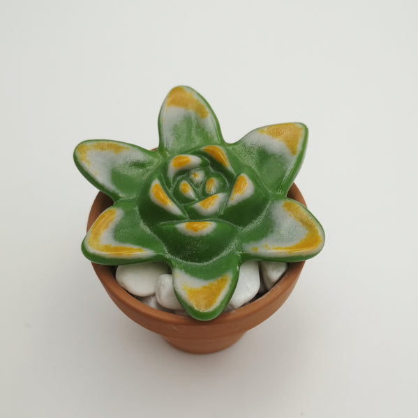 Fused Glass Succulent