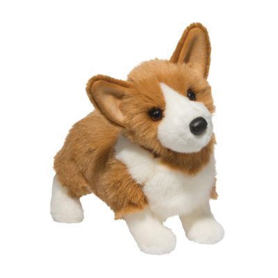 Corgi Dog Companion