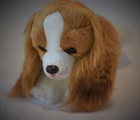 King Charles Cavalier Spaniel for People with Alzheimer's and Caregivers