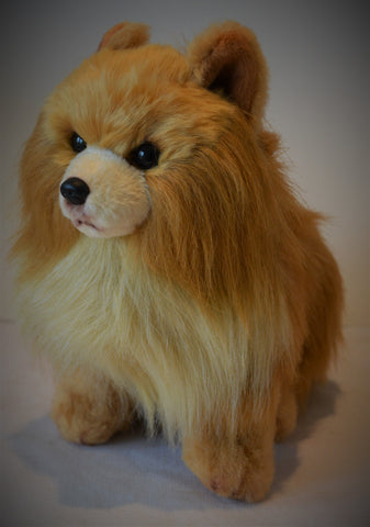 Pomeranian for People with Alzheimer's and Caregivers
