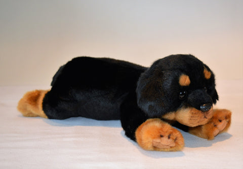 Rottweiler Puppy for People with Alzheimer's