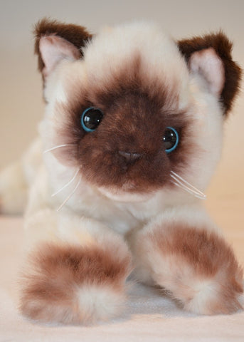Small Siamese Cat for People with Alzheimer's and Caregivers