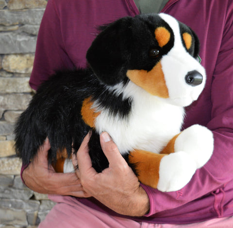 Large Bernese Mountain Dog for People with Alzheimer's