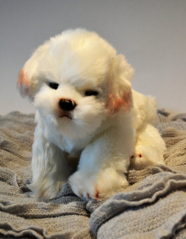Maltese / Bichon Puppy for People with Alzheimer's and Caregivers
