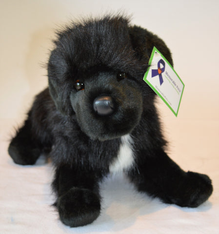 Newfoundland Dog for People with Alzheimer's and Caregivers