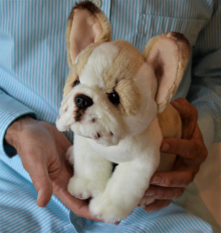 Small French Bulldog Puppy for People with Alzheimer's and Caregivers