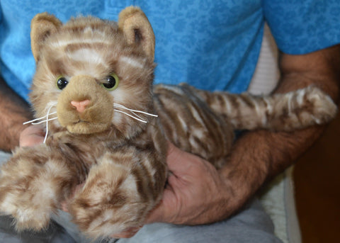 Small Tiger Striped Cat for People with Alzheimer's and Caregivers