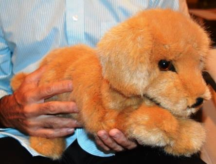 Large Reclining Golden Retriever Companion for People with Alzheimer's- (2 week delivery)