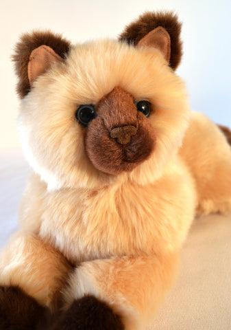 Golden Himalayan Cat for People with Alzheimer's and Caregivers