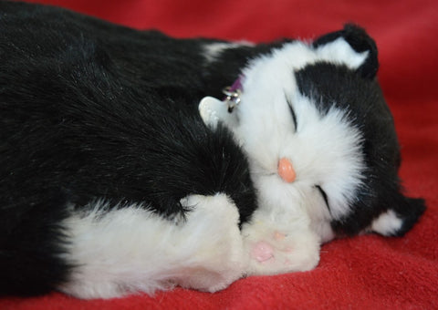 Breathable Black & White Kitten Companion Pet for People with Alzheimer's and Caregivers