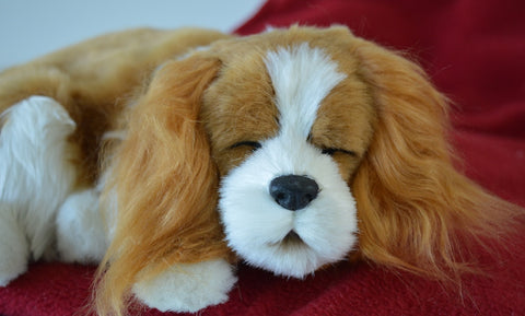 Breathable King Charles Cavalier Puppy Companion Pet for People with Alzheimer's and Caregivers