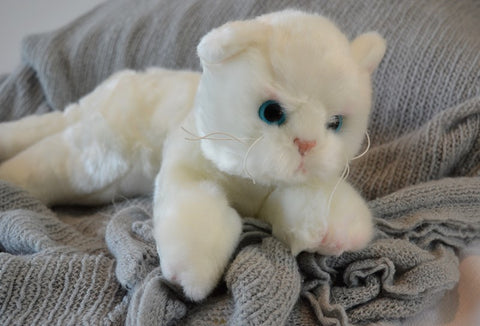 Small White Cat for People with Alzheimer's and Caregivers