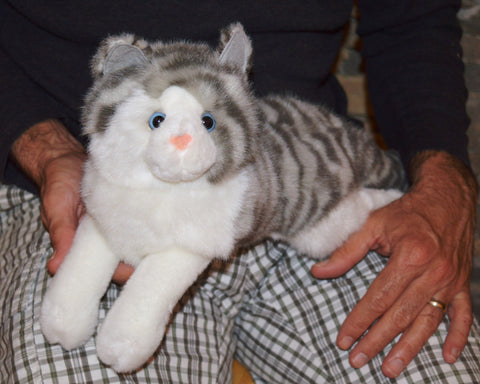 Grey and White Tiger Striped Cat for People with Alzheimer's and Caregivers