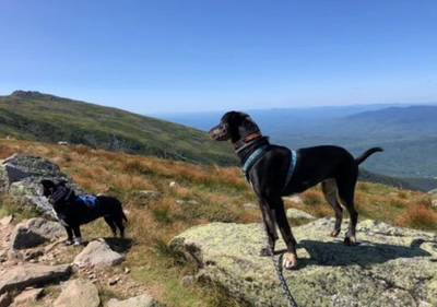 A Day in the Northern Presidentials