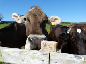 Just Moo Lavender Cows Milk Soap