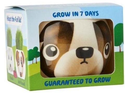 Paris Garden Grow Grass Head Dogs