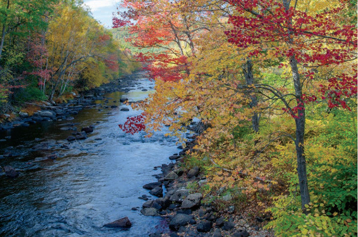 Millers River MA, Fall Colors
