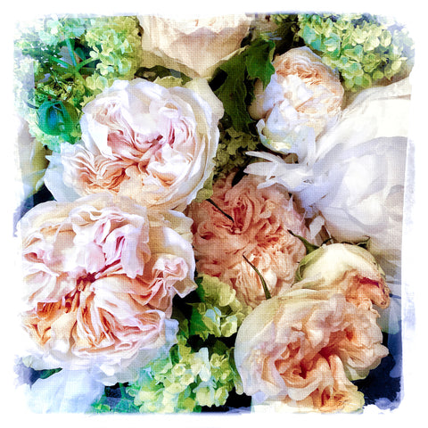 Pale Peonies | Square