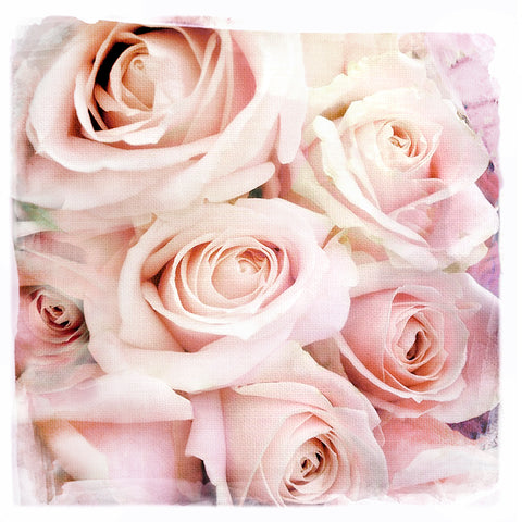 Pale Pink Roses | Square