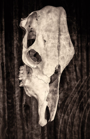 Stanley Skull Sepia | Rectangle