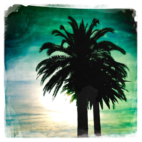Palm Tree at Sunset | Square