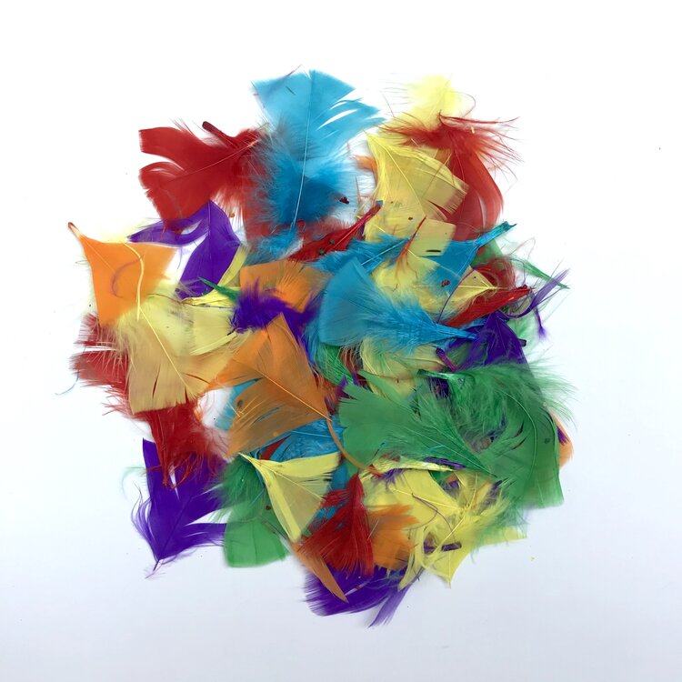 Small Colourful Feathers
