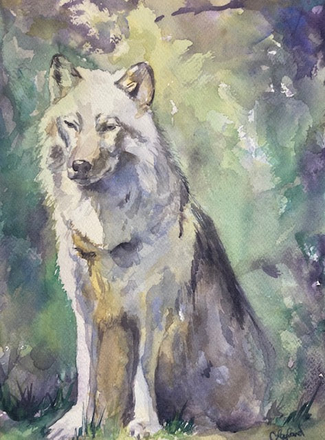 Lone Wolf - Original Watercolour