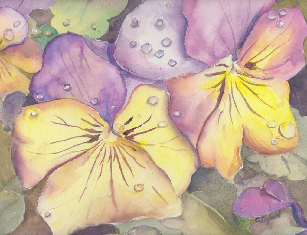 Bold Pansies - Original Watercolour