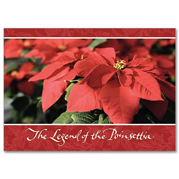The Legend Of The Poinsettia Miracle Of Christmas Card