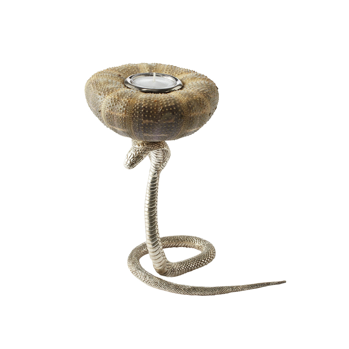 Candle Holder with Silver Plated Cobra