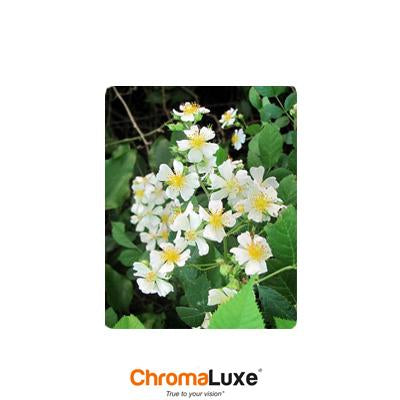 ChromaLuxe Sublimation Blank Aluminum Photo Panel