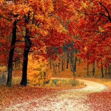 Load image into Gallery viewer, Autumn Walks Melt Pod