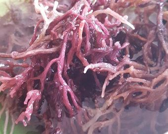 Raw Caribbean Wildcrafted Purple Sea Moss