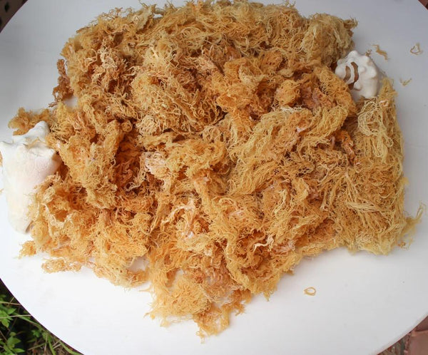 Raw Caribbean Wildcrafted Organic Sea Moss