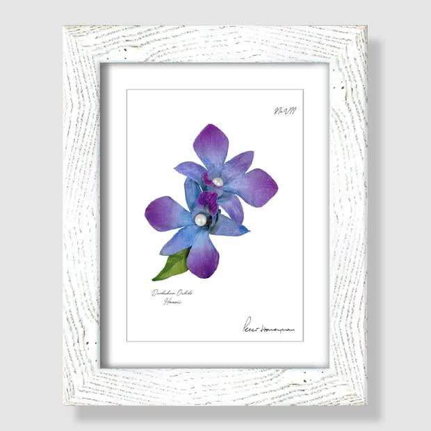 Blue Orchid White Wood Framed Print