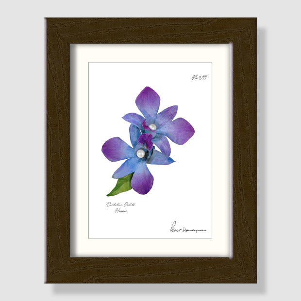 Blue Orchid Walnut Wood Framed Print