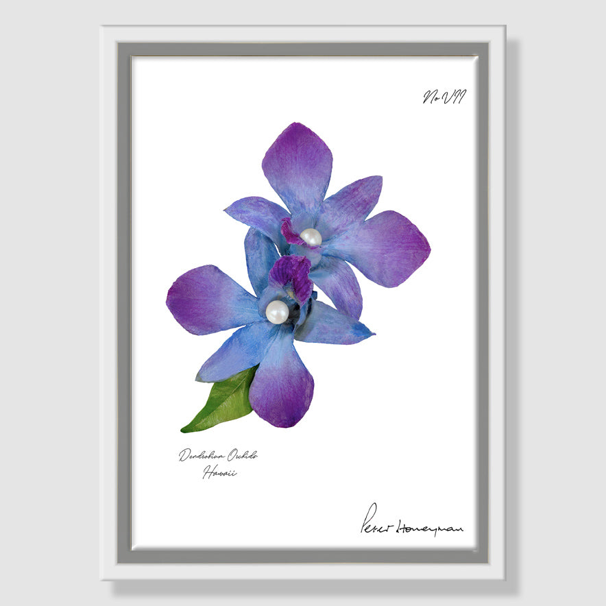 Blue Orchid Framed Canvas Print