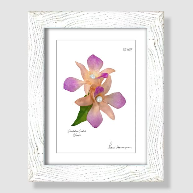 Peach Orchid White Wood Framed Print