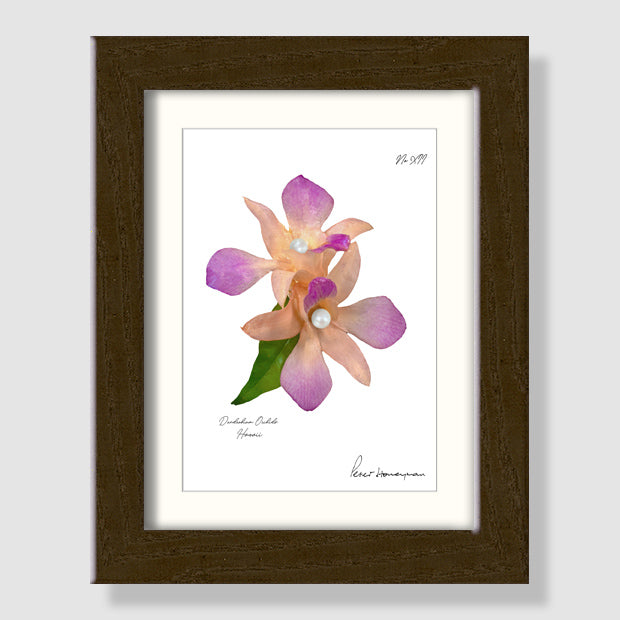 Peach Orchid Walnut Wood Framed Print
