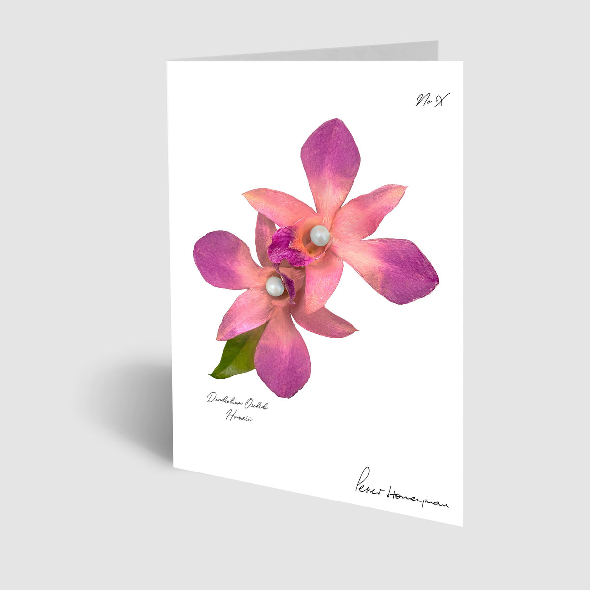 Pink Orchid Notecard
