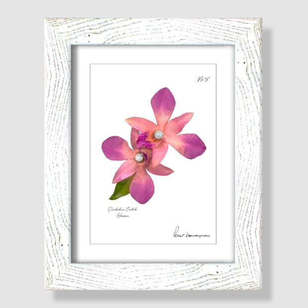 Pink Orchid White Wood Framed Print