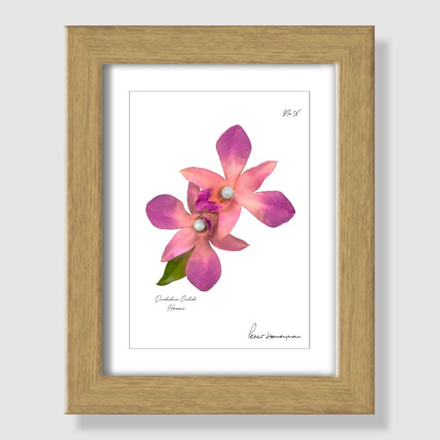 Pink Orchid Natural Wood Framed Print