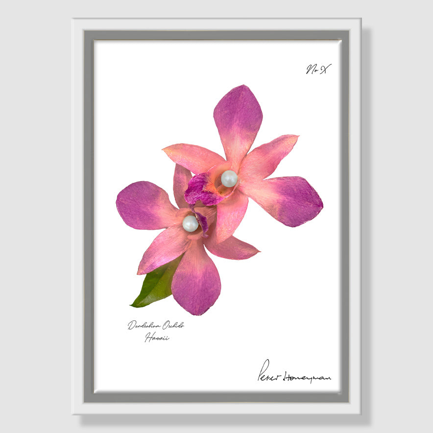 Pink Orchid Framed Canvas Print
