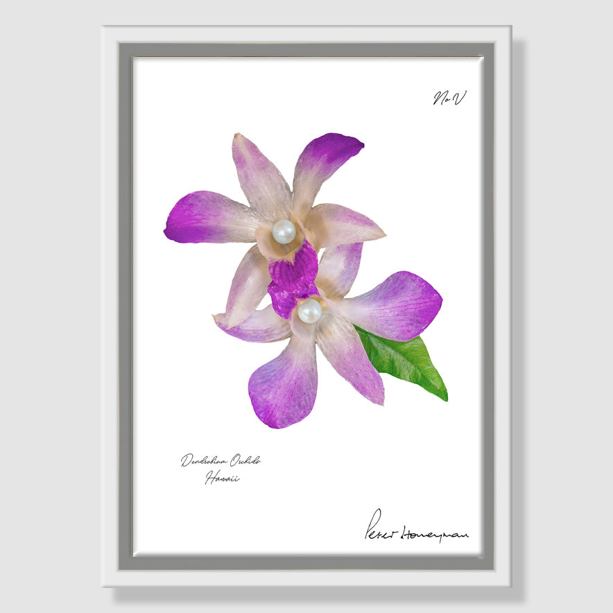 Lavender Orchid Framed Canvas Print