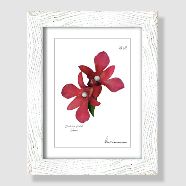 Red Orchid White Wood Framed Print