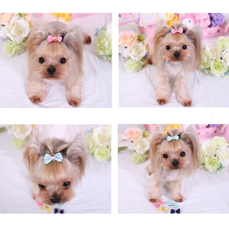 5Pcs/Set Cute Pet Puppy Dog Cat Hairpin Hair Bows Dog Hair Clips Pet Dog Grooming Hair Accessories