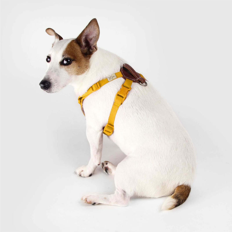 SPUTNIK - Comfort Dog Harness (Yellow) - Dog Harness (4 Sizes)