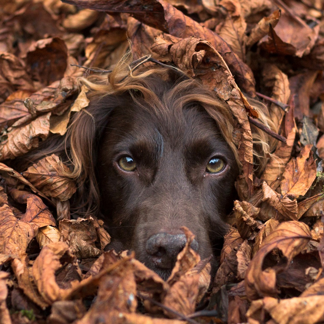Interview with Dog Photographer Megan Williams